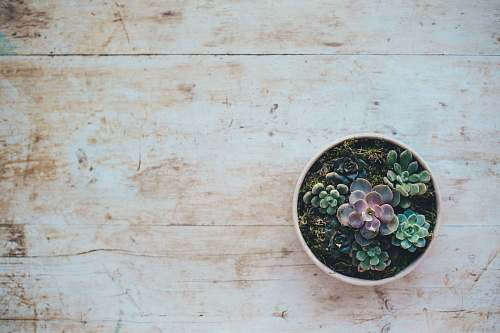 succulent top view photo of succulent plants background