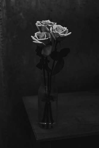 flower three rose flowers in vase black-and-white
