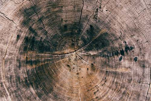 background round brown and black cut tree wood