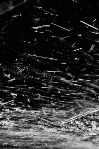 black-and-white  spider web