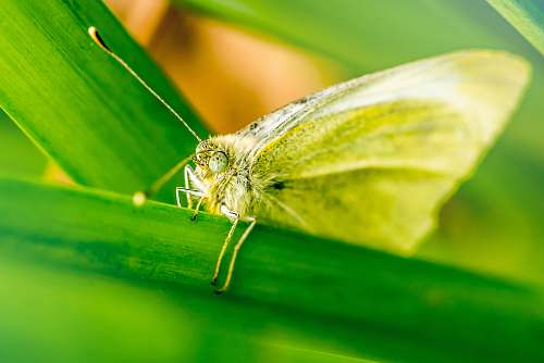animal brown butterfly perch on green plant moth