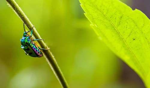 green irisdescent insect on leaf branch sanjay gandhi national park