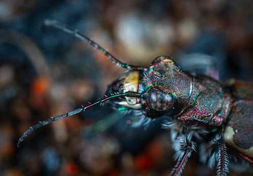 animal macro photography of black insect anisoptera