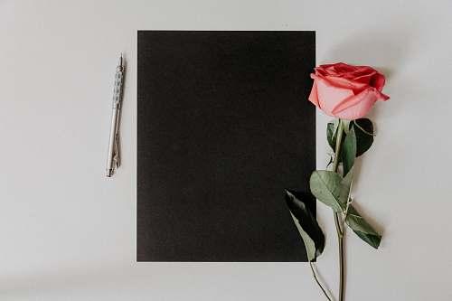 rose orange rose flower beside notebook and pen plant