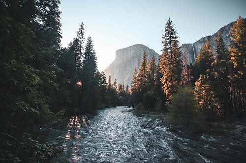 nature water stream surrounded with green trees yosemite valley