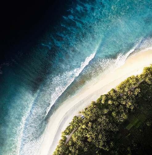 nature aerial view photography of sea and forest outdoors