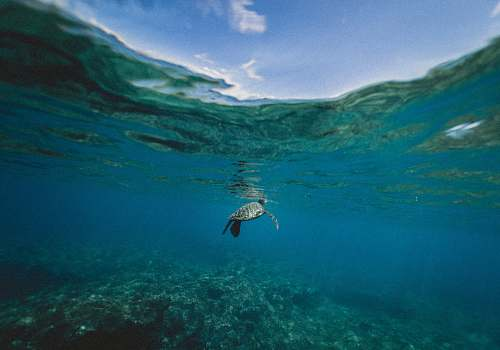 sea turtle turtle swimming underwater during daytime animal