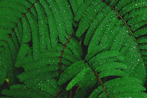 plant shallow focus photography of green leafed plant green