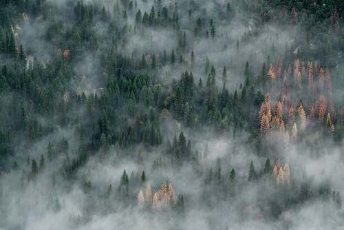 nature bird's view of tall trees covered with smokes landscape