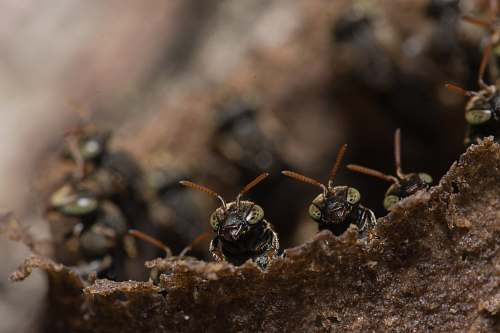 insect close up photography of black ants ant