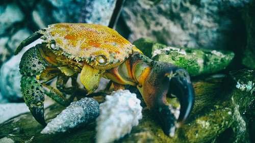 crab orange and black crab in macro shot phogoraphy sea life