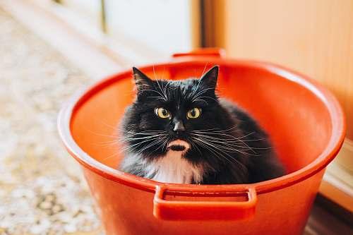 cat tuxedo cat inside bucket bucket