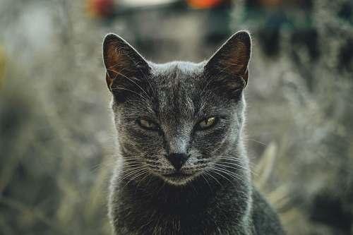 animal shallow focus photography of gray cat pet