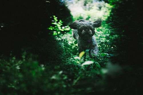 pet dog running near plants canine