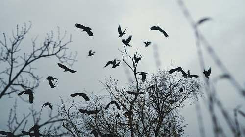 animal birds flying above bare tree during day bird
