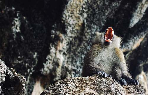 animal monkey near gray concrete wall during daytime krabi
