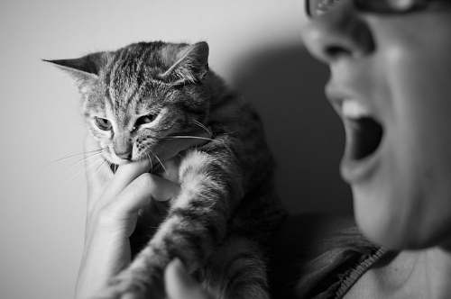 cat grayscale photography of person holding cat pet
