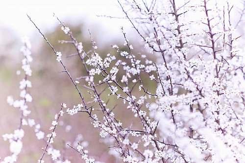blossom macro shot photography of white flowers flora