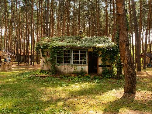 outdoors brown wooden house with vines building