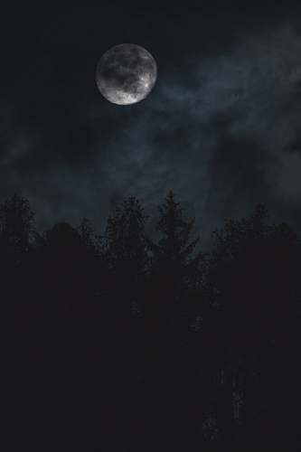outdoors silhouette of trees under moon night