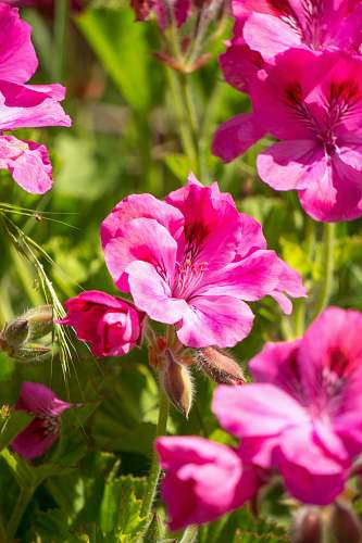 blossom macro photography of pink-petaled flowers flower
