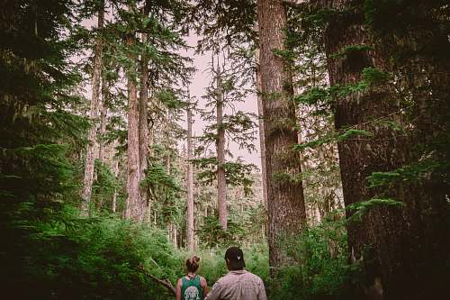 vegetation man and woman sitting on ground surrounded by trees during daytime forest