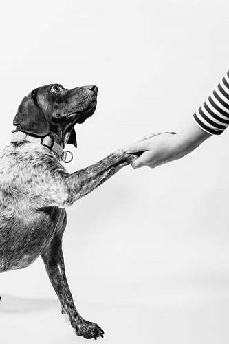 pet grayscale photo of person and dog holding hands dog