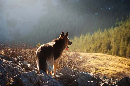 pet brown dog standing on gray rocks canine