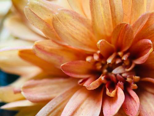 blossom close-up photography of orange-petaled flower plant