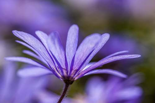 plant close-up photography of purple petal flower geranium