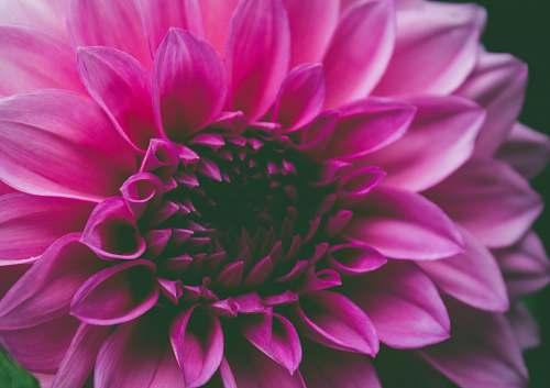 plant macro shot of pink flower flora