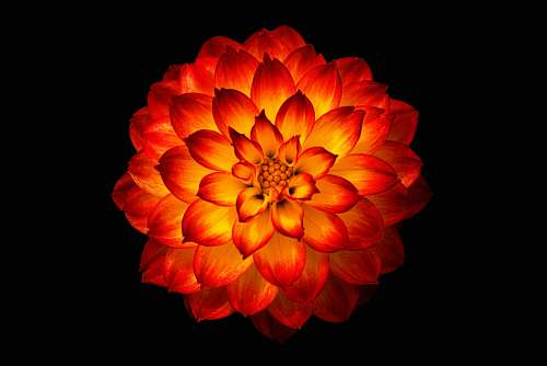 human red and yellow flower digital wallpaper people