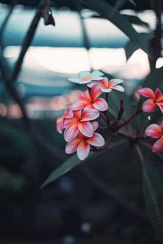 plant shallow focus photography of pink flowers geranium