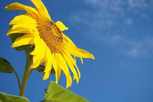 sunflower shallow focus photography of yellow sun flower flora