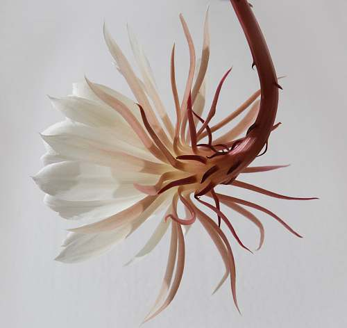 plant white and brown flower flora