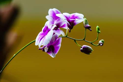 blossom white and purple orchids blooming during daytime geranium