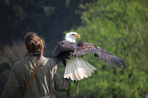 people selective focus photography of white and brown eagle perch on woman left hand during daytime eagle