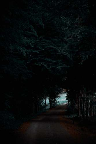 road gray road between forest darkness