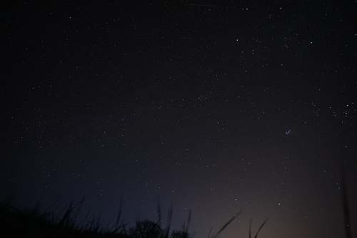 night low angle photography of grasses under stars at nighttime starry sky