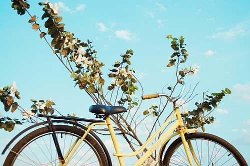 bicycle  foz do iguaçu