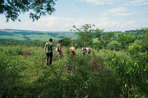 forest  brasil