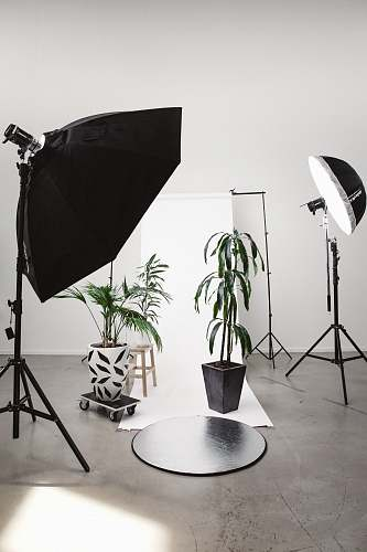 tripod three green linear leafed plants beside softbox photography