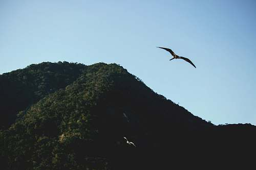 flying bird flying by the mountain animal