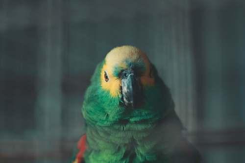 parrot selective focus photo of green and yellow bird animal