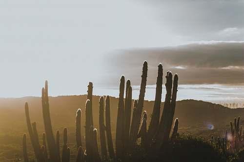 plant green cactus cactus
