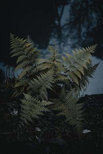 plant green leafed plant fern