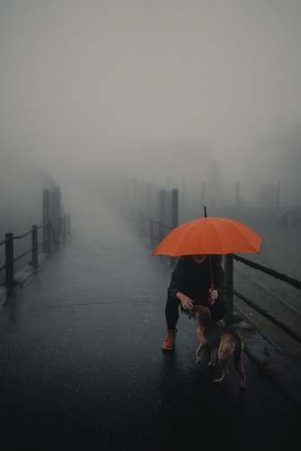 nature person and dog under red umbrella dog