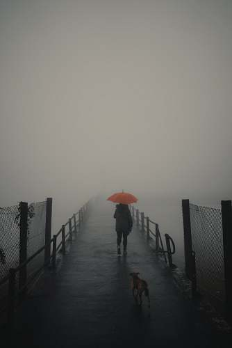 nature person walking with umbrella in front of walking dog dog