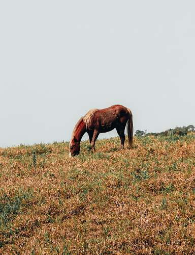 horse horse eating grass in field field