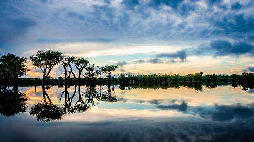 outdoors reflection on trees on clear body of water during sunset tree